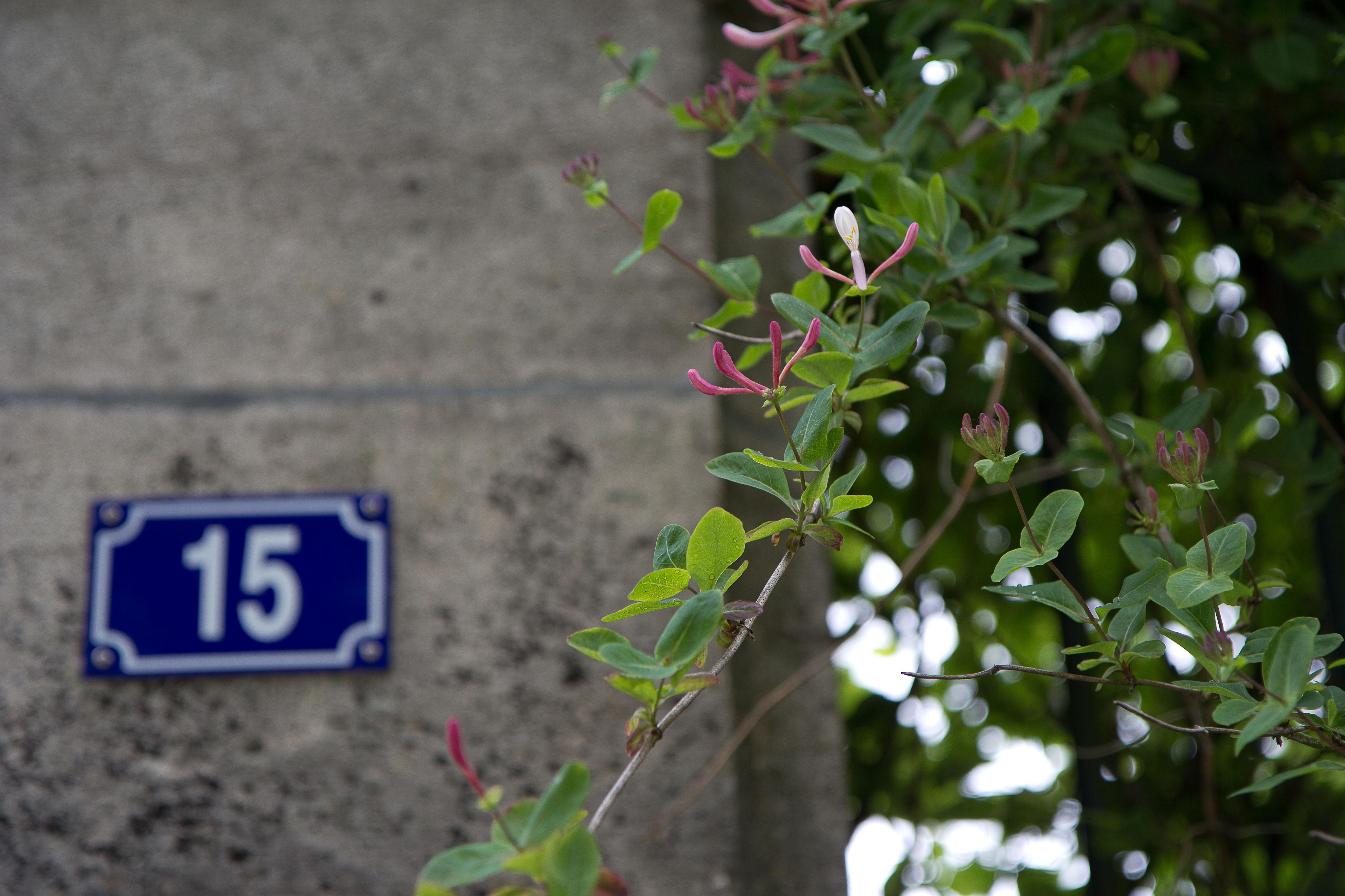 huisnummer 15 met hibiscus