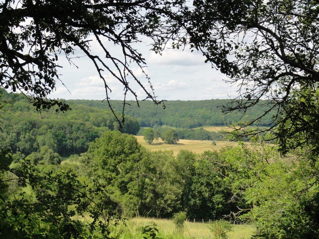 Doorkijkje vanuit het bos bij Anrosey