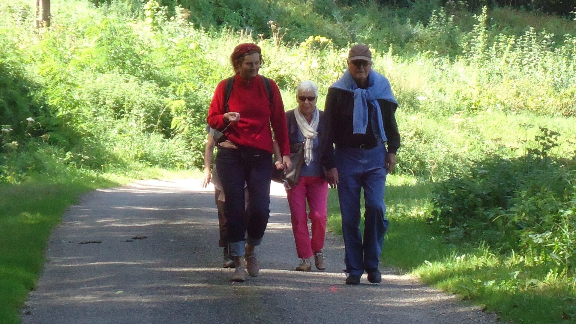 4 wandelaars op een wandelpad tussen het groen