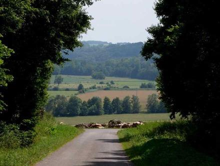 weg tussen de bomen met doorkijk naar heuvels haute marne