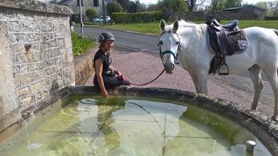 Paard drinkt bij fontijn