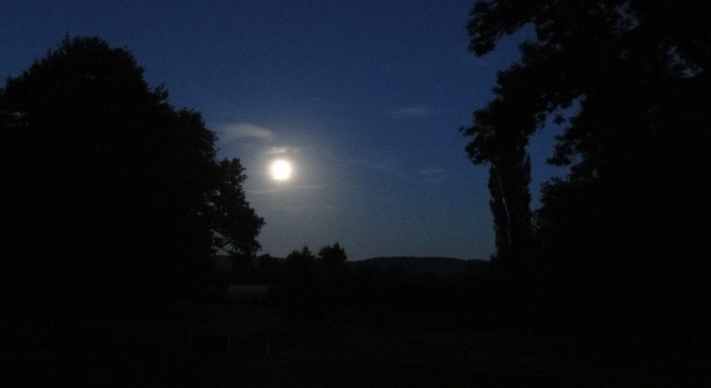 Volle maan tussen donkere bomen