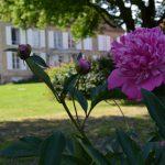 Een bloeiende pioenroos met het huis onscherp op de achtergrond